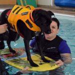 puppy swim Edmonton Alberta
